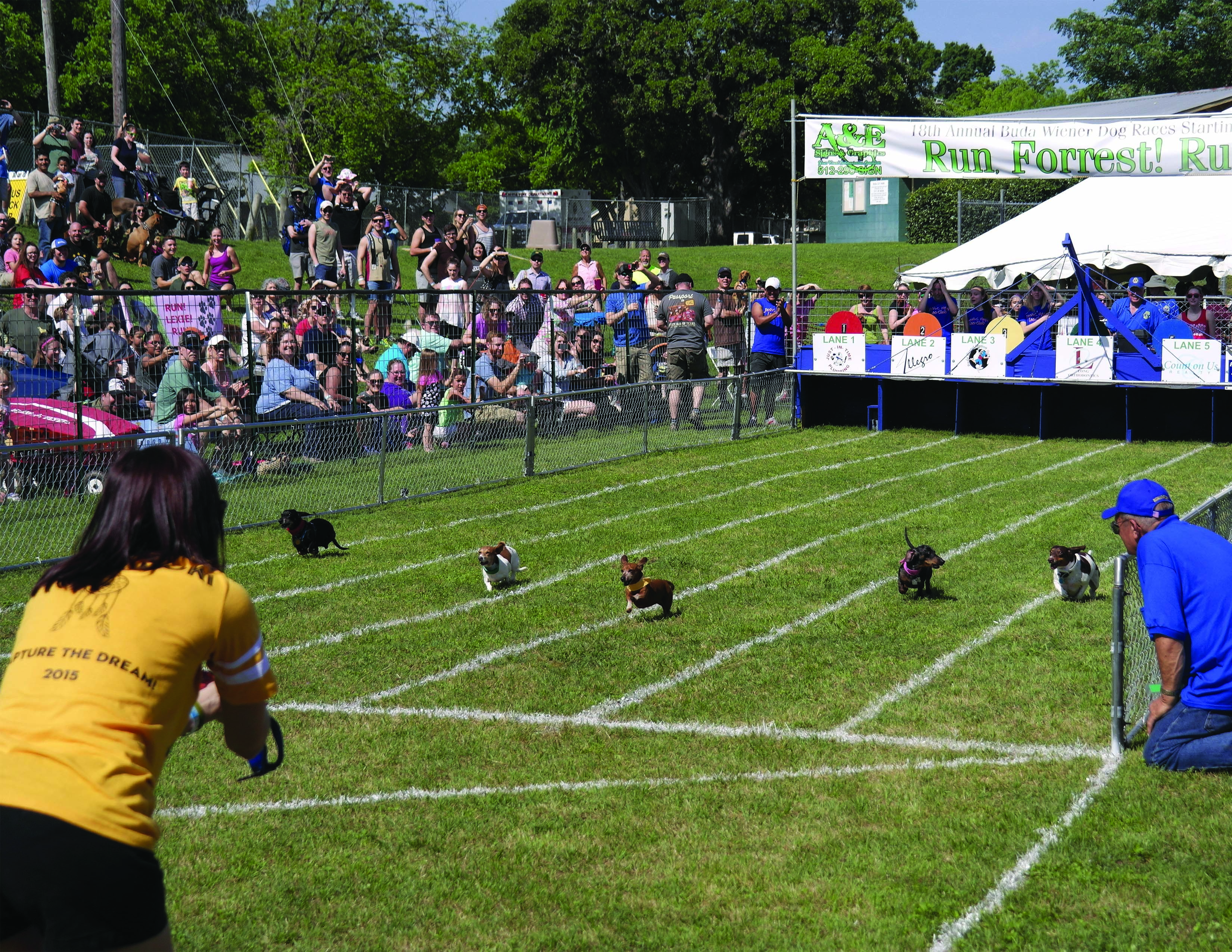 Buda Wiener Dog Races
