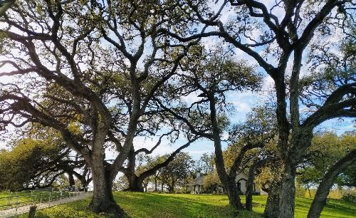 View of heritage oak trees in front of the Stagecoach House in Historic Stagecoach Park